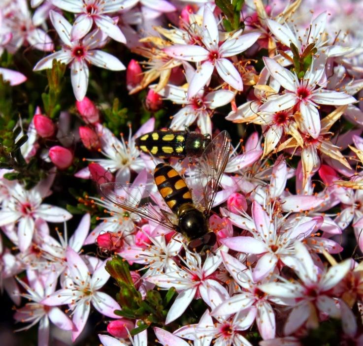 12785-beetleandfly