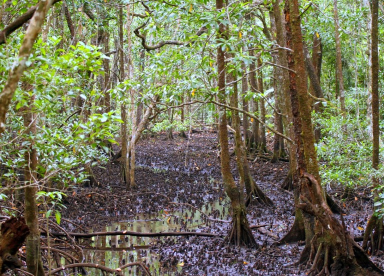 20653-mangrove1