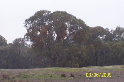 [BHE+Tree.jpg]