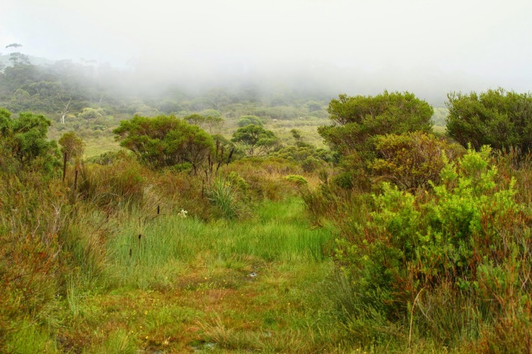 98526-heathland