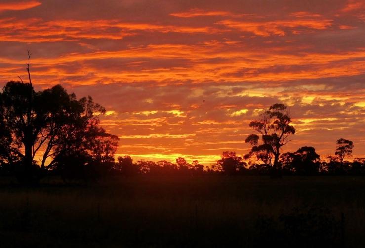 c51c6-sunset25202