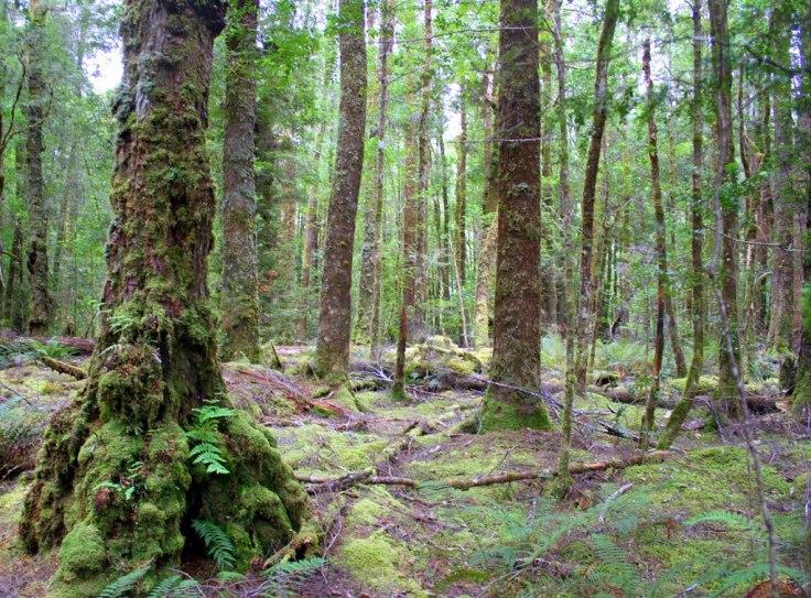 d006d-forest2bnear2bfranklin2briver