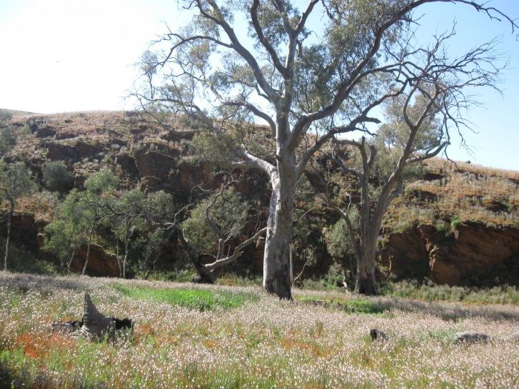 fd5e0-flinderslandscape
