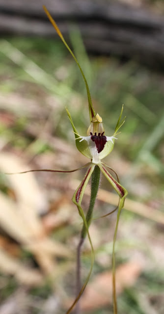 7954d-green-comvbedsunorchid